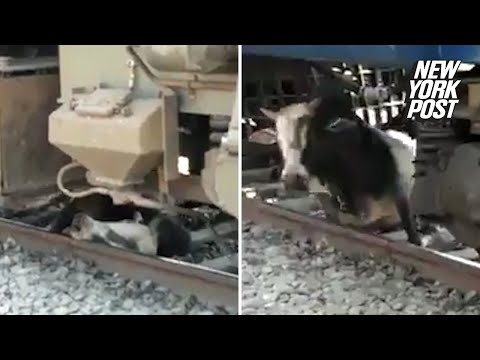 Video Bull miraculously survives getting run over by train | New York Post download in MP3, 3GP, MP4, WEBM, AVI, FLV January 2017