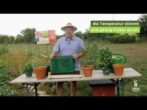 Wurmkompostierung in der Stadt