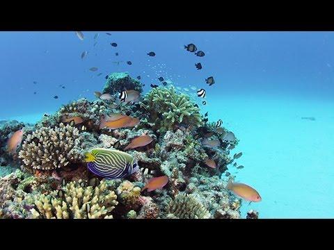 ケラマの海