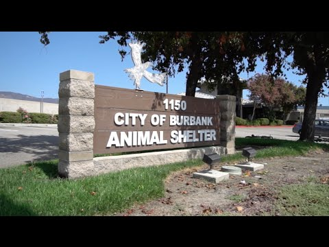 "Burbank Animal Shelter PSA ""For Every One Of These.."""