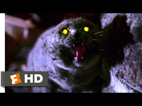 Pet Sematary (1989) - The Cat Comes Back Scene (2/10) | Movieclips