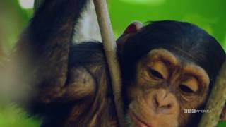 Growing Up To Be Alpha | Dynasties | Saturdays at 9pm | BBC America