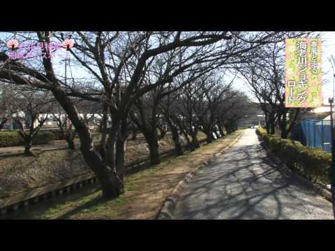 アドスポットお花見特集-海老川ジョギングロード-