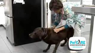 Degenerative Disc Disease in Dogs
