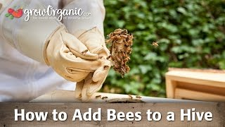 Beekeeping for Beginners—Adding Bees