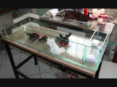 Comment monter un filtre aquarium la r ponse est sur for Construire un aquarium