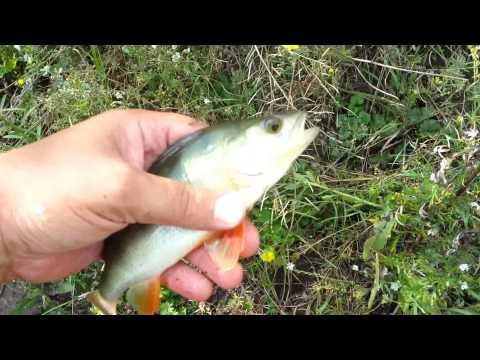 рыбалка на озере андреевское
