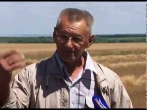 Аграрии Большечерниговского района первыми в регионе начали уборочную кампанию