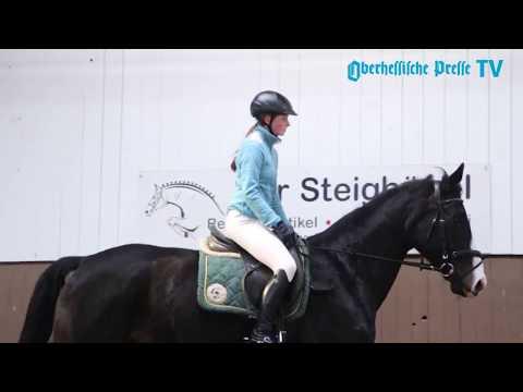 Hessenmeisterschaften im Vierkampf: Kreisreiterbund ...