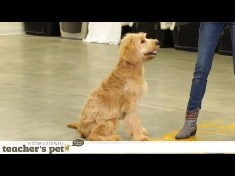 guarding - Watch more dog training tips with Victoria Stilwell: http://www.youtube.com/playlist?list=PL0C724F6F6A597540&feature=view_all Many dogs guard their food bowl...