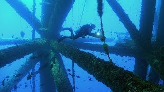In the Gulf of Mexico, Jonathan visits several oil rigs to scuba dive on the structure and learn how these offshore platforms attract marine life as artificial reefs.JONATHAN BIRD'S BLUE WORLD is an Emmy Award-winning underwater science/adventure program that airs on public television in the United States.**********************************************************************If you like Jonathan Bird's Blue World, don't forget to subscribe!Support us on Patreon!http://patreon.com/BlueWorldTVYou can buy some Blue World T-shirts & Swag!http://www.blueworldtv.com/shopYou can join us on Facebook!https://www.facebook.com/BlueWorldTVTwitterhttps://twitter.com/BlueWorld_TVInstagram@blueworldtvWeb:http://www.blueworldTV.com**********************************************************************