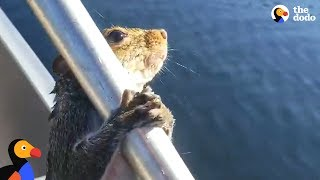 Guy Helps Squirrel Trying To Swim In Lake | The Dodo by The Dodo