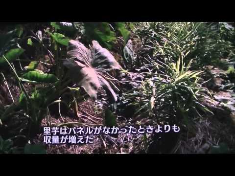ソーラーシェアリング上総鶴舞 NHK2015