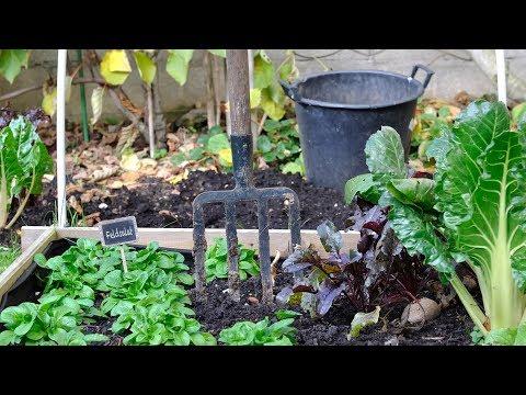Garten für Faule: Zeit sparen mit Sträuchern und Hoch ...