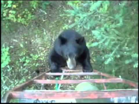 Hunter scares off bear - Canadian style
