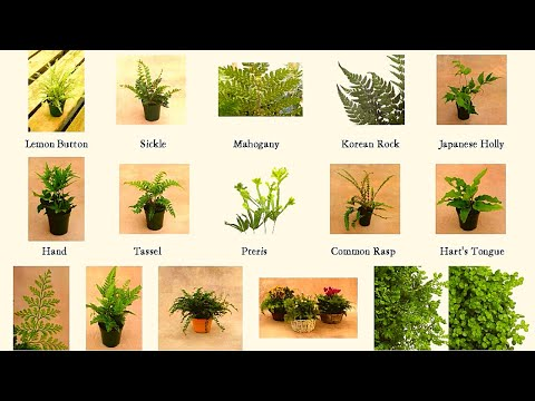 Fern Varieties A to Z
