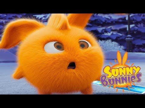 Sunny Bunnies - FUNNY BUNNY | Videos For Kids | Sunny Bunnies 2018 | Funny Cartoon