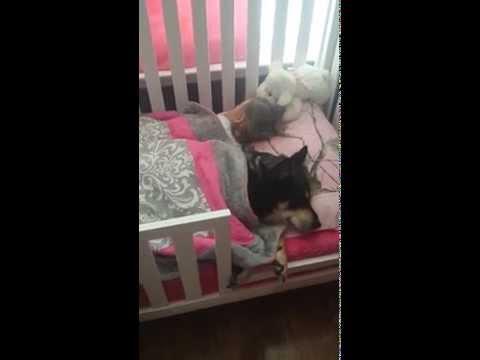 Encuentra a su bebé y a su perro durmiendo juntos la siesta ¡Qué tierno!