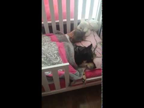 飼主找不到汪星人 才發現牠陪女嬰睡到嬰兒床上了