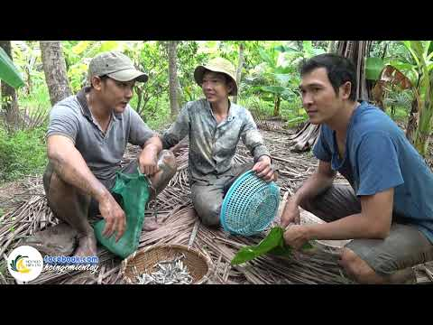 Đuổi Bắt Cá Lòng Tong Về Kho Khô Quẹt | Hội Ngộ Miền Tây - Tập 152 - Thời lượng: 33:58.