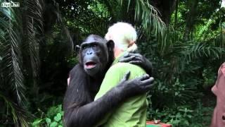 Video L' abbraccio commovente dello scimpanzé (bonobo) Wounda a Jane Goodall MP3, 3GP, MP4, WEBM, AVI, FLV September 2018
