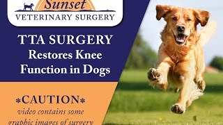 TTA Surgery Restores Knee Function In Dogs