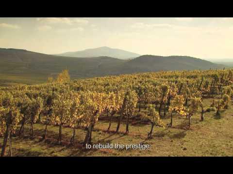 TOKAJI Borrégió - TOKAJ Wine Region