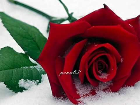 rose - Some say love, it is a river that drowns the tender reed. Some say love, it is a razor that leaves your soul to bleed. Some say love, it is a hunger an endle...