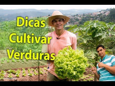 Dicas para cultivar legumes, plantas de colheita e alegria, legumes e alimentos orgânicos