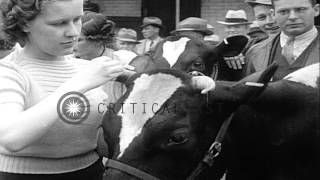 Sabetha (KS) United States  city images : A cow wins May Queen title in Sabetha, Kansas. HD Stock Footage