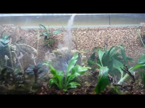 Aqarium umgebaut zur offenen orchideenvitrine