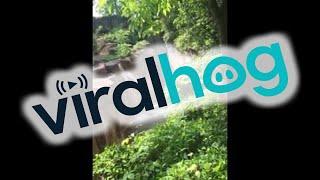 Boy Falls into Gorilla Enclosure at Cincinnati Zoo (Original HD) || ViralHog