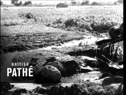 Nile Irrigation (1940-1949)