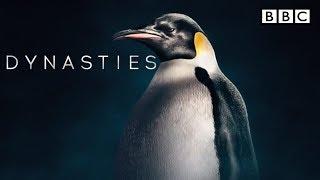 BBC America Dynasties penguins | BBC Dynasty trailer | Emperor penguin | Episode 2 - The Survivor