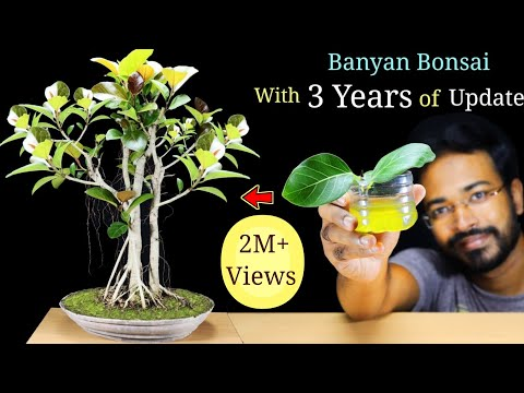 How to EASILY make a Bonsai Tree  | Banyan Bonsai | Best Bonsai Tree for Beginners