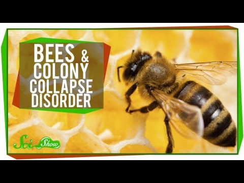 What's Happening to Honey Bees?