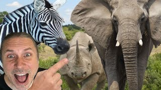 MOST INSANE AFRICAN ANIMAL ADVENTURE!! | BRIAN BARCZYK by Brian Barczyk