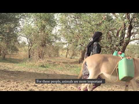 Alternatives to Camps in Niger