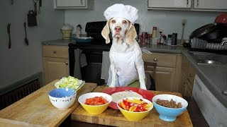 Chef Dog Makes Tacos: Funny Dog Maymo by Maymo