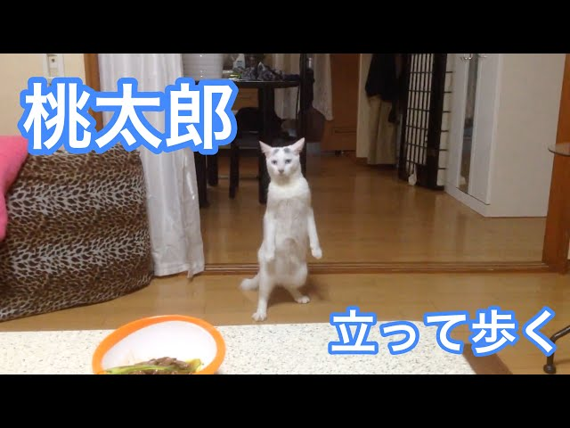 This Cat Was Told To Step Away From The Table. Watch Her Hilarious Reaction
