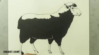 Scratchboard Illustration of a Black Sheep for a Wine Label