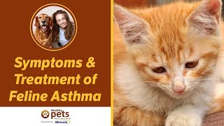 Symptoms&Treatment of Feline Asthma