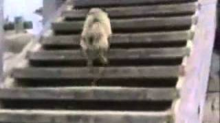 Try Not To Laugh. Best Animals Fail&Wins Compilation Ever !! Funny Hahahah !!
