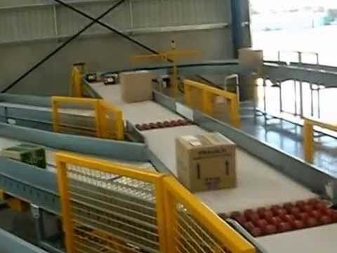 Freight Sorting Conveyors