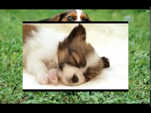 Funny Dogs Cute Face Expressions Pictures Compilation