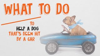 What to do to help a dog hit by a car