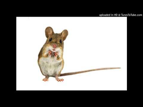 Brainy quotes - 05-11-2018 Brainy Mice