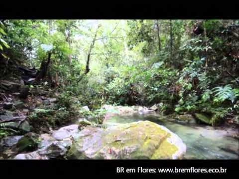 BRemFlores - Trilha Cachoeira Santa Bárbara (Cavalcante-GO)