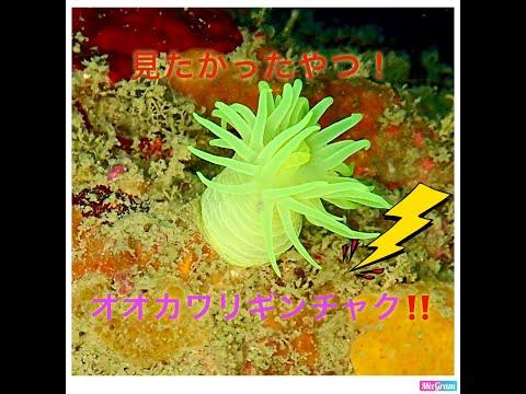 ??·????? ??????????under water scuba diving_Búvárkodás