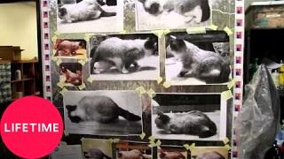Grumpy Cat at Jim Henson's Creature Shop